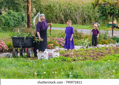 AMISH PENNSYLVANIA, USA - SEPTEMBER 16, 2017: Family working in the garden in Amish Country in Pennsylvania, USA