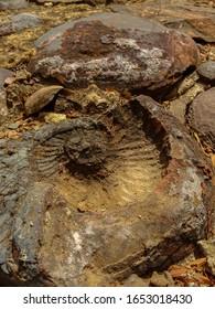 Fósil de amonita en Chiquiza Boyaca