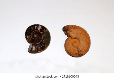 Ammonites, ancient fossils. Close-up. From the collection.