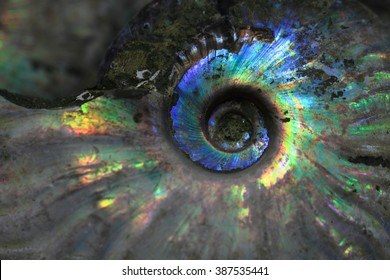 ammonites fossil as nice natural geology background