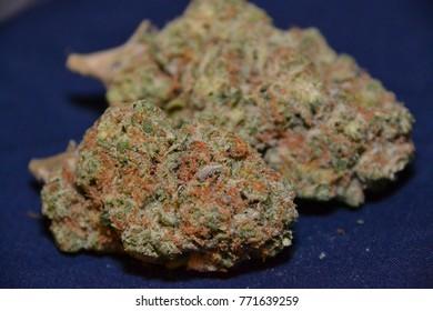 amnesia haze is a sativa cannabis strain