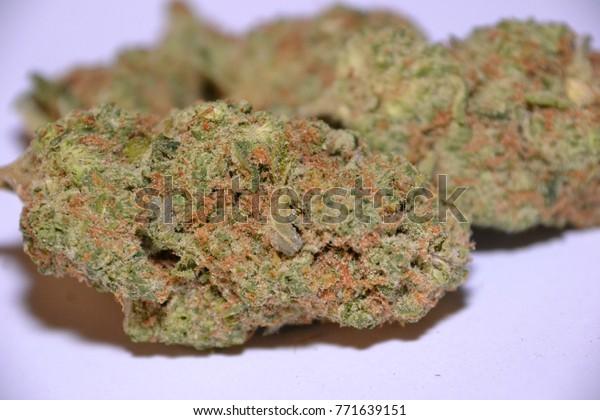 Amnesia Haze Sativa Cannabis Strain Stock Photo (Edit Now) 771639151