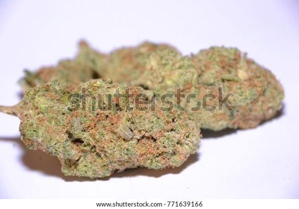 Amnesia Haze Sativa Cannabis Strain Stock Photo (Edit Now