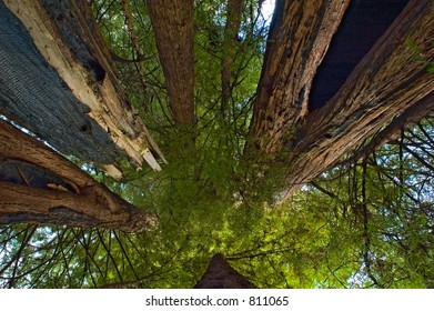 among giant redwoods, California