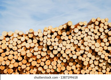 Amount of log pine wood stock at sawmill in europe with background blue sky and clouds. Europe industrial wood yard with stacks of new wood poles. Objects for garden, home construction.