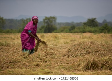 Ampara, Eastern Province / Sri Lanka - March 15th 2010: Villagers processing paddy, Karaitivu - Ampara (A31) road. An year after the 30 year long civil war ended with life returning slowly to normal