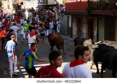 AMPUERO, SPAIN - SEPTEMBER 10: Bulls and people are running in street during festival in Ampuero, celebrated on September 10, 2016 in Ampuero, Spain