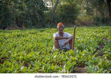 AMRAVATI, MAHARASHTRA, INDIA - 2 JANUARY 2018 : Unidentified farmer working in beetroot field, An Indian rural farming scene.