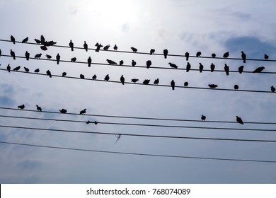 AMRITSAR, INDIA - NOVEMBER 7, 2014: Flock of birds on the wires with the background of suny sky.