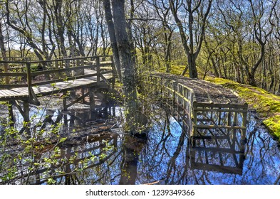 Amrum, Germany, May 2, 2015: wooden structures and walkways in a pond at the historical Meeram Vogelkoje bird-catching installation