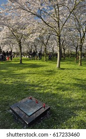Amstelveen, Netherlands - April 2, 2017: Portrait view of the memorial stone of the 2011 tsunami of Fukushima, in the cherry blossom garden in the Amsterdam Forest (Amsterdamse Bos)
