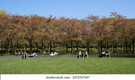 Amstelveen, the Netherlands. April 2018. Blossom park, part of the Amsterdamse Bos (English: Amsterdam Forest), an English park or landscape park in the municipalities of Amstelveen and Amsterdam.