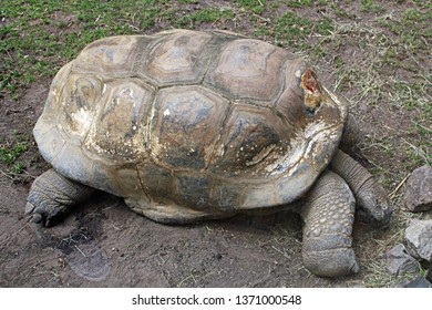 Amsterdam / Netherlands - 16/06/2017: Old Giant Tortoise lying in the sunshine on the ground at the Artis Zoo in Amsterdam (the oldest zoo in the country).