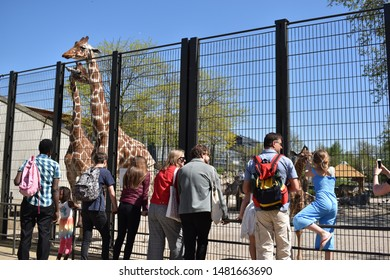 AMSTERDAM, NETHERLANDS - 2018: People watching and looking at a giraffe in ARTIS Zoo in Netherlands.