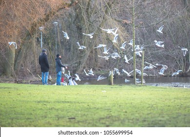 Amsterdam, The Netherlands - 8 January 2018: People walking their dogs and feeding birds in the park in the winter in the Vondelpark