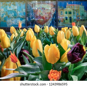 AMSTERDAM, NETHERLANDS - April 6, 2018: Multicolored bright tulips near the Van Gogh Museum with his famous paintings and self portrait on street wall background in the Amsterdam.