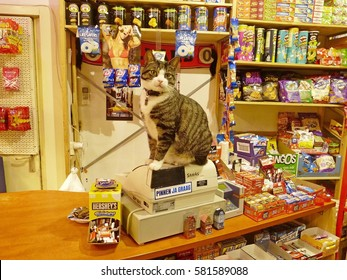 AMSTERDAM, THE NETHERLANDS - DECEMBER 3, 2013. Cashier cat sitting on the top of cash machine in an Amsterdam mini market, with shelves of chips and chewing gum in the background.