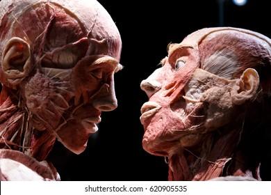 Human Body Art Images Stock Photos Vectors Shutterstock