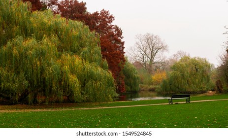 Amsterdam, Netherlands - November 21, 2018: Photo taken to the old trees inside the famous Vondelpark in Amsterdam.