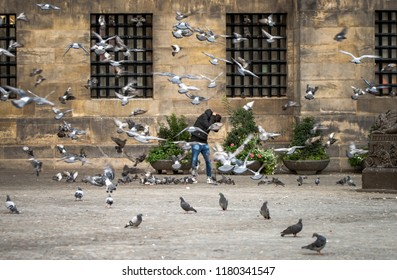 Amsterdam, North Holland / Netherlands - September 13 2018: A young man ducks and covers when a large flock of pigeons takes flight in Dam Square, Amsterdam, the Netherlands.