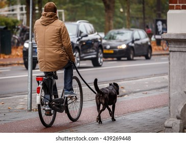 AMSTERDAM - NOVEMBER 5, 2015: Cyclist in Amsterdam walks his dog while riding his bike.  Dutch love their bicycles.