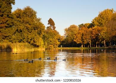 Amsterdam Vondelpark in autumn. Vondelpark is in the center of the capital of the Netherlands.