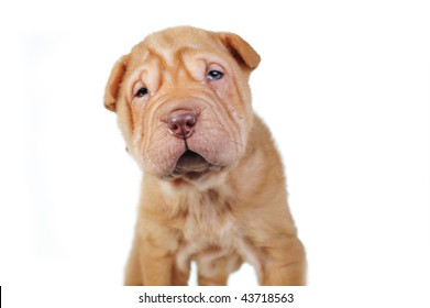 Amusing brown puppy on  white background