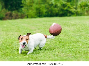 Amusing dog running to catch American football ball at back yard green grass lawn