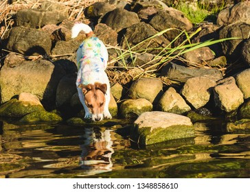 Amusing dog stained with multicolor paint blots looking at his reflection in water