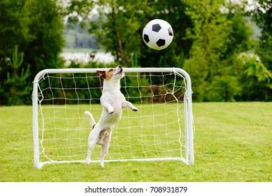 Amusing goalie catching generic football (soccer) ball saving goal