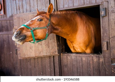 amusing red horse in  wooden stall on farm