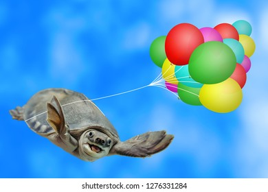 Amusing turtle is flying on multicolor air balloons in blue sky background with copy space. Funny animal close-up. Paratrooper in sky. Parachuting. Amazing happy turtle is having fun. Animal skydiver.