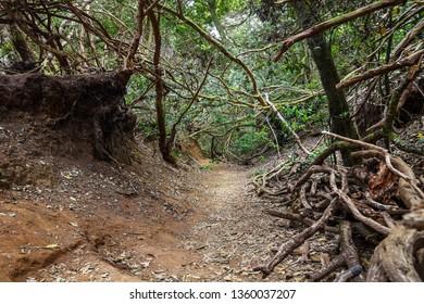 Anaga Natural Park Pathway. Parque Rural de Anaga, Tenerife, Spain.