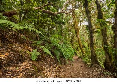 Anaga rain forest in Tenerife island, Canary islands, Spain.