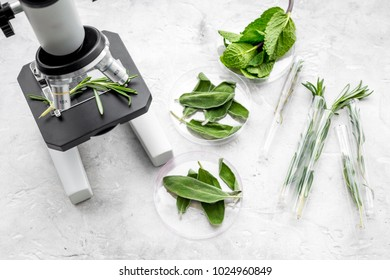 Analysing food concept. Healthy products. Herbs rosemary, mint under microscope on grey background top view