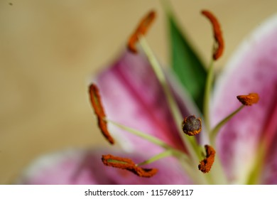 The Analysis of a Flower