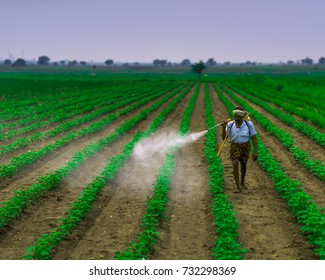 Anantapur, Andhra Pradesh, INDIA - 10 OCTOBER 2017 : Unidentified Agricultural worker spraying pesticide in soybean fields. An farming scene in india.