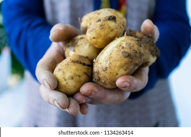 Anatolian woman holding organic potatoes