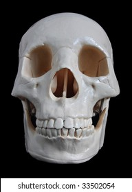 An anatomical model of a human skull isolated on black