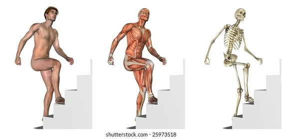 Anatomical overlays depicting a man climbing stairs - 3D render.