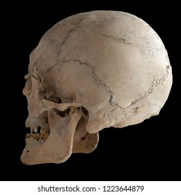 Anatomical  real human skull, closeup. Angle from the back. Isolated on black background and clipping path.