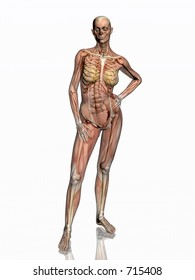 Anatomically correct medical model of the human body, women, muscles and ligaments showing transparent and skeleton projected into the body. 3D illustration over white. Front view.