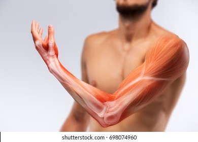 Anatomy of human arm. Human arm musculature.