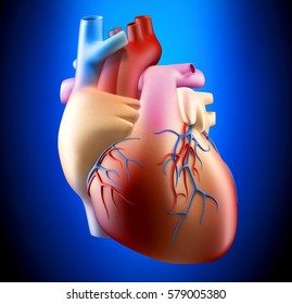 Anatomy of Human Heart on Blue Background 3D illustration