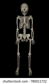 anatomy of a human skeleton in full growth on a black background.