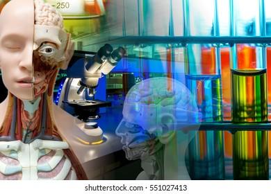 Anatomy model with laboratory glassware on laboratory background.