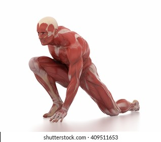 Anatomy muscle map white isolated - fight pose
