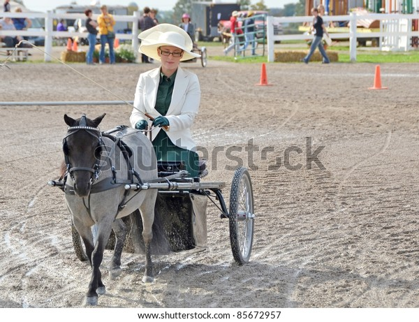 ANCASTER, ONTARIO, CANADA - SEPTEMBER 24: unidentified female on miniature horse drawn carriage at the Pleasure Driving competition at the Fall Fair on September 24, 2011 in Ancaster, Ontario, Canada