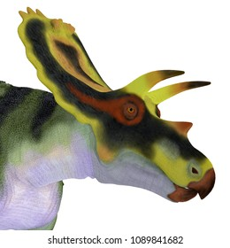 Anchiceratops Dinosaur Head 3D illustration - Anchiceratops ornatus was a herbivorous Ceratopsian dinosaur that lived in Alberta, Canada in the Cretaceous Period.