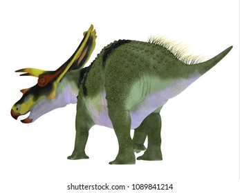Anchiceratops Dinosaur Tail 3D illustration - Anchiceratops ornatus was a herbivorous Ceratopsian dinosaur that lived in Alberta, Canada in the Cretaceous Period.